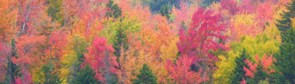 Weston Vermont Conservation Commission